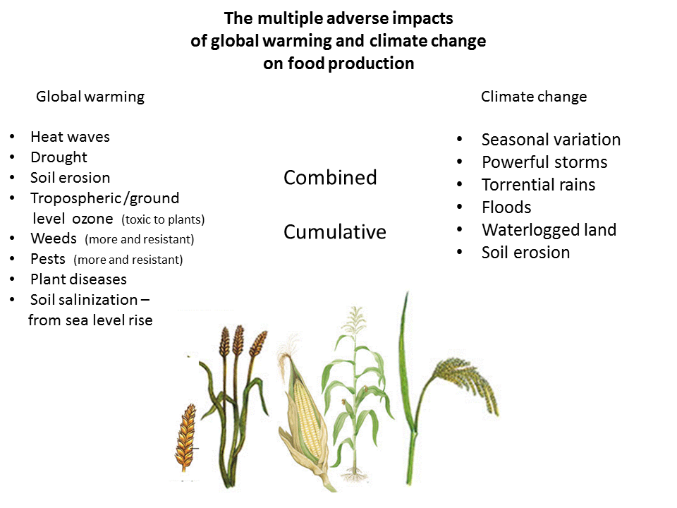 climate change and food production A) climate change and food production complex relationships between crops, atmospheric composition and temperature, combined with the complexities of world agricultural policies and trade, make it difficult to predict the future.