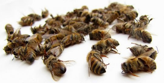 dead+bees