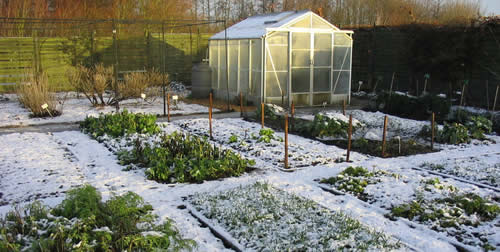 Backyard Greenhouse Winter : Winter Gardening Tips Best Winter Crops and ColdHardy Varieties