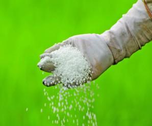 Farmer is pouring chemical fertilizer