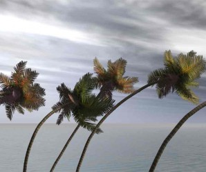 hurricane_palms