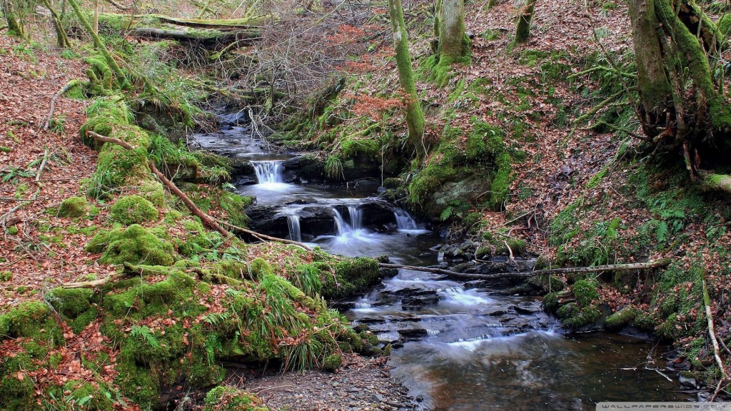 forest-creek-10_00449850