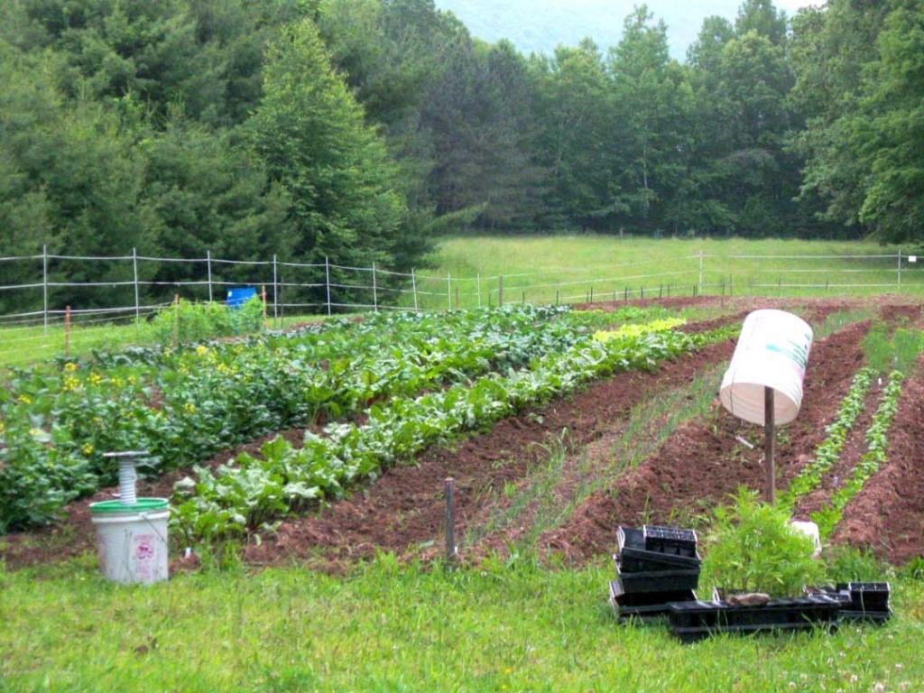 garden_field