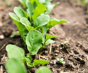 1510-Gardening-w