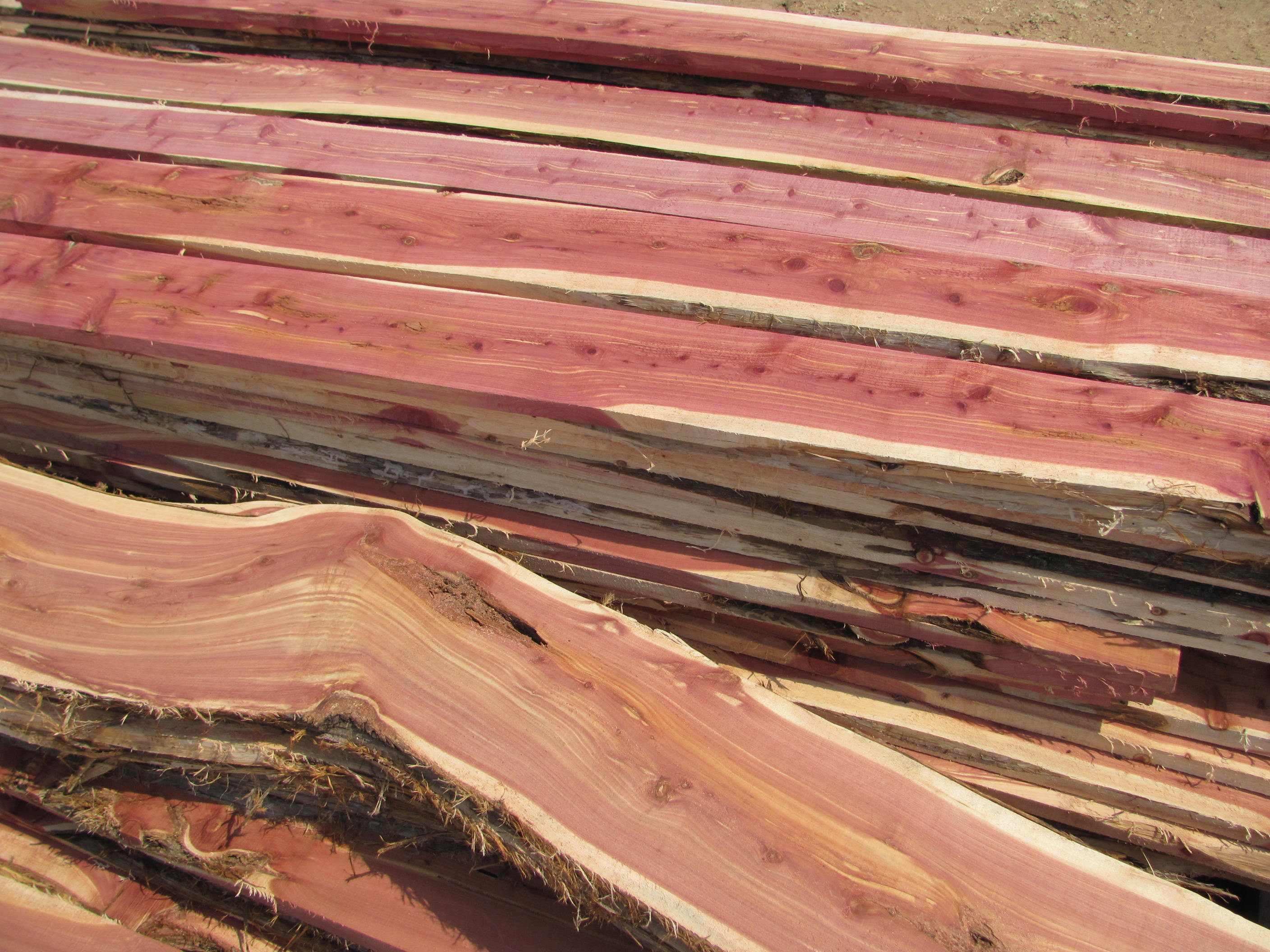 Diy chainsaw mill eat tomorrow blog for What to make with tree logs