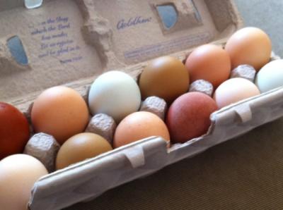 backyard-chicken-eggs-400x298