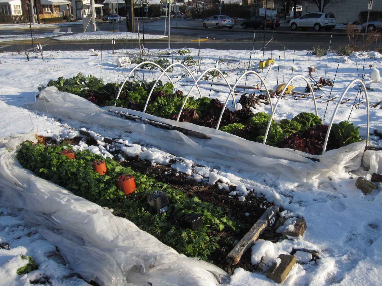 Winter gardening tips best winter crops and cold hardy varieties eat tomorrow blog - Gardening mistakes maintaining garden winter ...