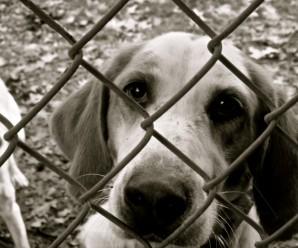 caged-dog